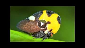 10 Most Beautiful Insects on Planet Earth