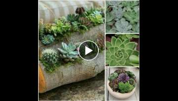 how to grow succelent plants
