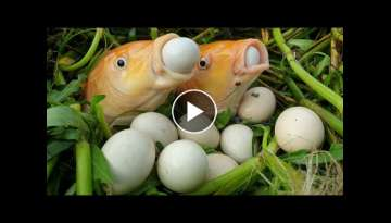 Viral Fish Eggs Video 2020 |Is It True Or Imaginary?Most Interesting And Attention-Grabbing Video