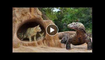 Primitive Man Saves Family Cats From Komodo Dragron Attack - Most Amazing Wild Animal Attack