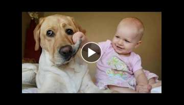 Funny Babies Laughing Hysterically at Dogs Compilation
