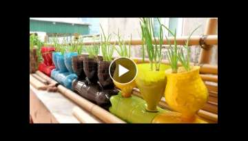 Growing onions in colorful plastic bottles, very easy you should try