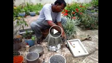 How to make bonsai pot with jut bag or coarse cotton cloth and cement
