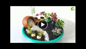 Table top plants Decoration/indoor plants/creative gardening idea for small space/ORGANIC GARDEN